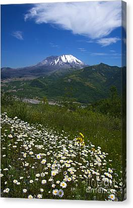 Mt. St. Helens View Canvas Print