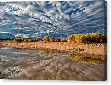Mud Puddle Canvas Print by Cat Connor