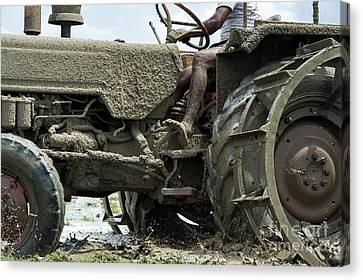Mud Canvas Print by Tim Gainey