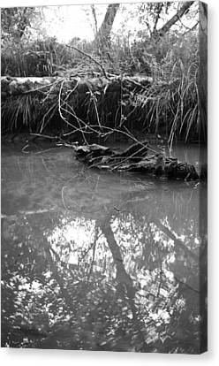 Canvas Print featuring the photograph Muddy Creek by Adria Trail