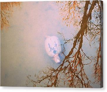 Muddy Spring Turtle Canvas Print by Patricia Januszkiewicz
