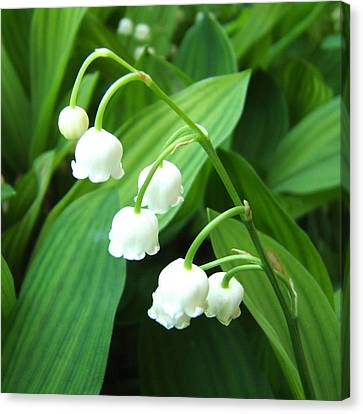 Canvas Print featuring the photograph Muguet by Marc Philippe Joly