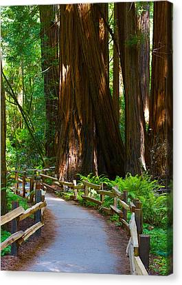 Autum Abstract Canvas Print - Muir Woods by Michael Blesius