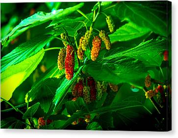 Mulberries - Fruit - Berries Canvas Print