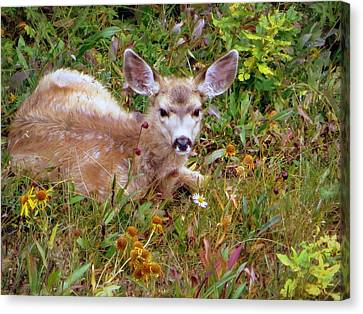 Canvas Print featuring the photograph Mule Deer Fawn by Karen Shackles