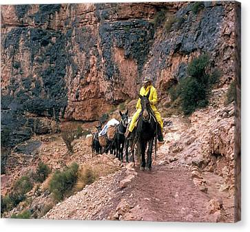 Mules Hauling Rubbish In The Grand Canyon Canvas Print by Jim West