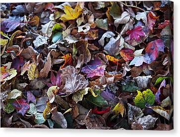 Red Leaf Canvas Print - Multicolored Autumn Leaves by Rona Black