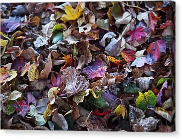 Multicolored Autumn Leaves Canvas Print
