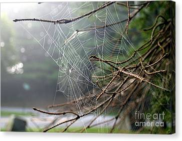 Multiple Webs - Near Canvas Print