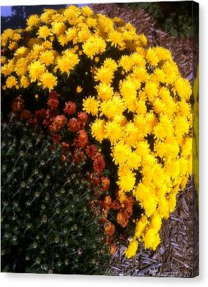 Mums In The Fall Canvas Print by Deborah Fay