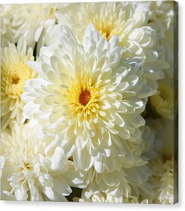 Canvas Print featuring the photograph Mums The Word by Courtney Webster
