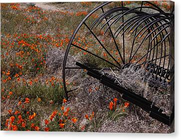 Canvas Print featuring the photograph Munz Poppy by Ivete Basso Photography