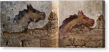 Mural Of Animal On Wall, Acre Akko Canvas Print
