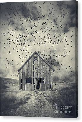 Murder Of Crows Canvas Print by Edward Fielding