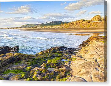 Auckland Canvas Print - Muriwai Beach Auckland New Zealand by Colin and Linda McKie