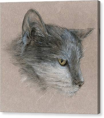 Canvas Print featuring the drawing Murray The Cat by Penny Collins
