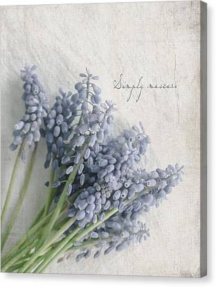 Muscari Canvas Print by Beverly Cazzell