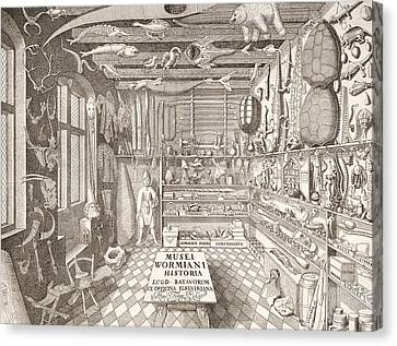 Museum Of Ole Worm, Leiden, 1655 Engraving Canvas Print