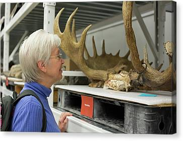 Museum Visitor With Moose Antlers Canvas Print