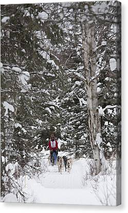 Musher In The Forest Canvas Print by Tim Grams