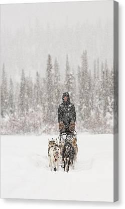 Mushing Through A Snow Storm Canvas Print by Tim Grams