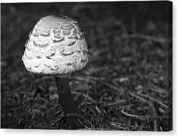 Mushroom Canvas Print by Adam Romanowicz