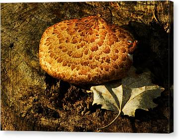 Mushroom And Leaf Canvas Print by Jack Zulli