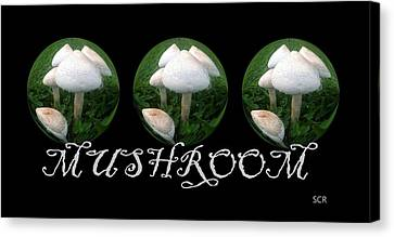 Mushroom Art Collection 2 By Saribelle Rodriguez Canvas Print by Saribelle Rodriguez