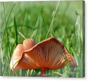 Nature Canvas Print - Mushroom Creases by Gena Weiser
