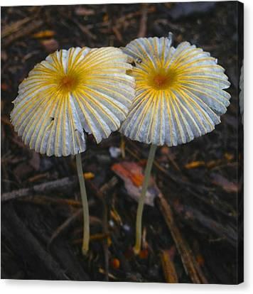 Mushroom Flowers Canvas Print
