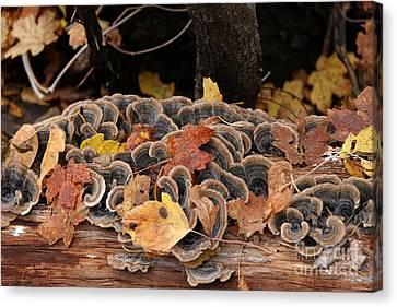 Mushroom Log Canvas Print by Ron Chilston