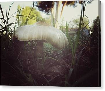 Mushroom Canvas Print by Snow  White