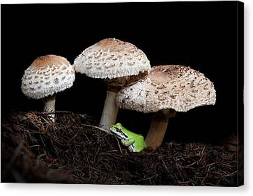 Mushrooms And Company Canvas Print by Angie Vogel