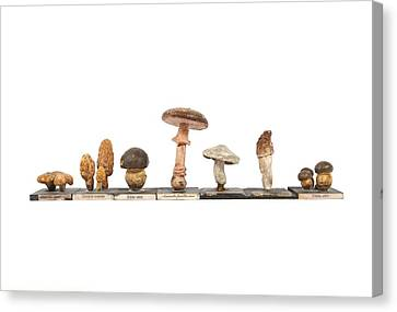 Mushrooms, Historical Model Canvas Print by Science Photo Library