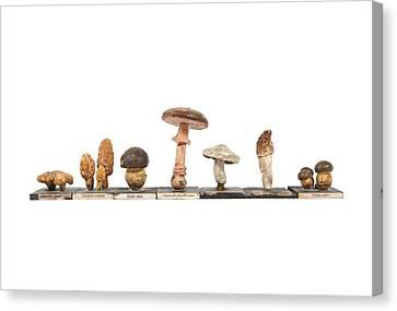 Mushrooms, Historical Model Canvas Print