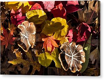 Shrooms Canvas Print - Mushrooms In Fall Leaves by Kathleen Bishop
