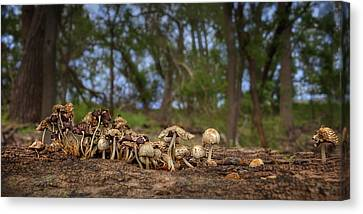 Mushrooms In The Woods #2 Canvas Print by Nikolyn McDonald