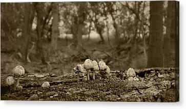 Mushrooms In The Woods Canvas Print