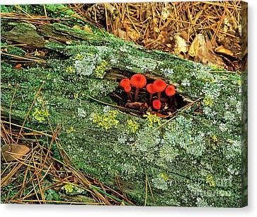 Mushrooms On A Log Canvas Print