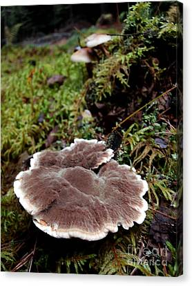 Mushrooms On A Stump Canvas Print by Steven Valkenberg