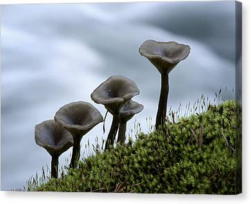 Canvas Print featuring the photograph Mushrooms On Moss by Betty Depee