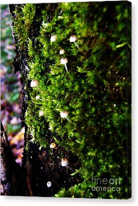 Canvas Print featuring the photograph Mushrooms by Vanessa Palomino