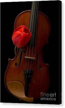 Music Lover Canvas Print by Edward Fielding