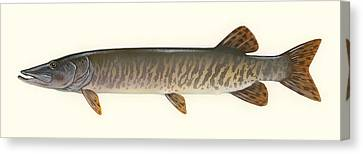 Muskellunge  Canvas Print by Mountain Dreams