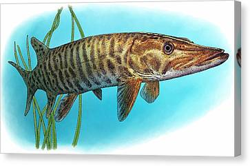 Muskellunge Canvas Print by Roger Hall