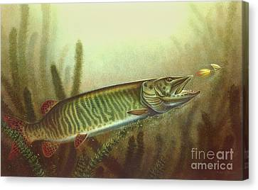 Muskie And Spinner Bait Canvas Print