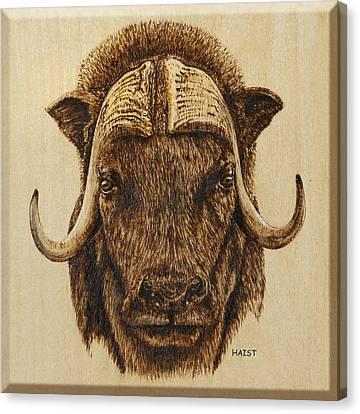 Muskox Canvas Print by Ron Haist