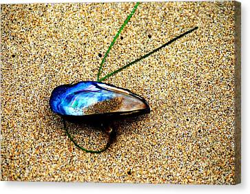 Canvas Print featuring the photograph Mussel Shell And Seagrass by Bob Wall