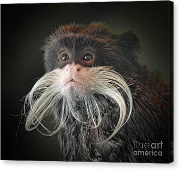 Mustached Monkey Emperor Tamarin IIi  Canvas Print by Jim Fitzpatrick