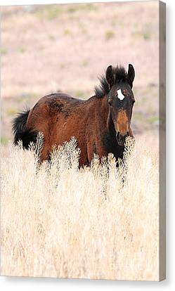 Canvas Print featuring the photograph Mustang Colt In The Grasses by Vinnie Oakes
